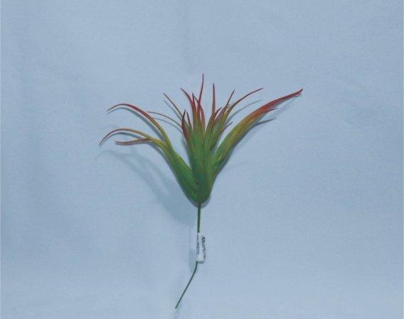 Flor Cactus Estrela