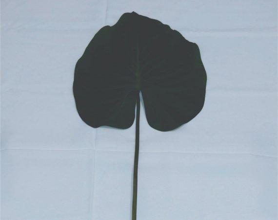Flor Folha Tropical (verde)