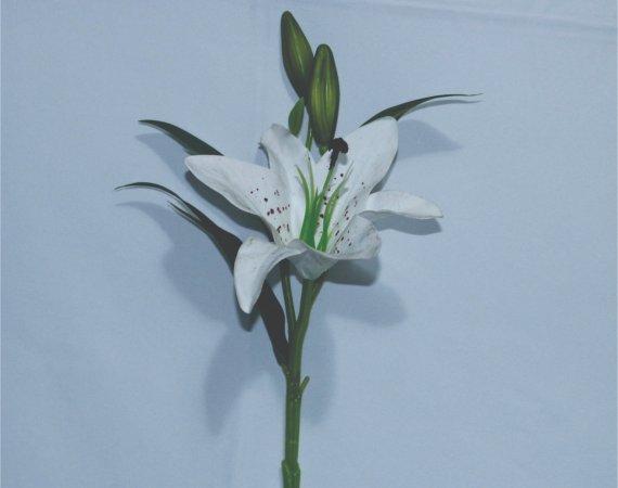 Flor Lirio Branco