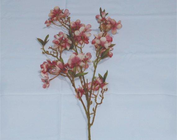 Flor Macieira Rosa