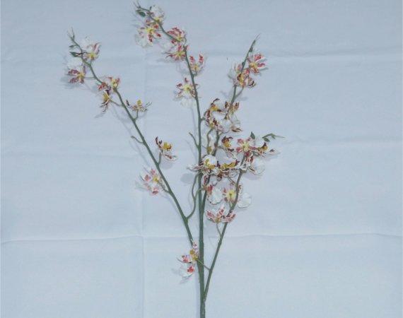 Flor Orquídea Asiática Branco