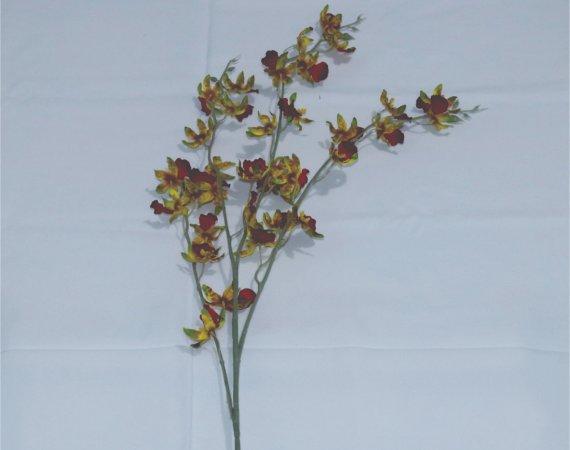 Flor Orquídea Asiática Vermelha