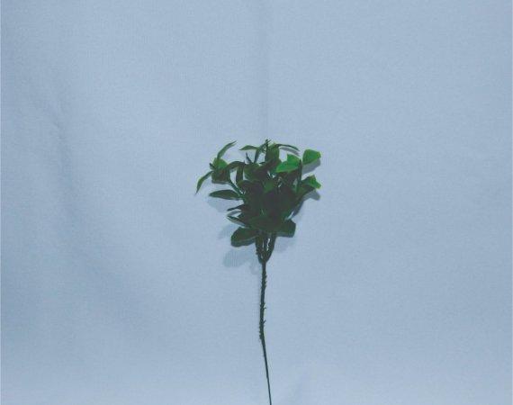 Flor Raminhos Folha Verde